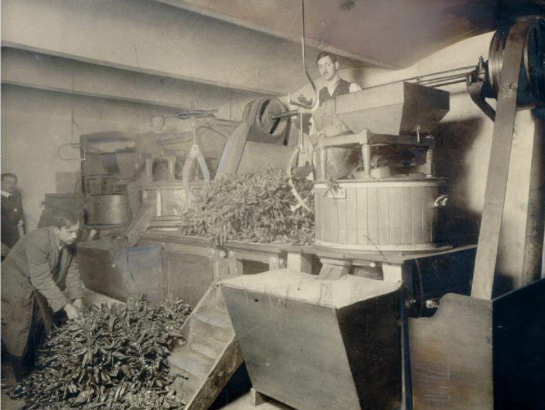 Crno-bela fotografija: Kotányi mlin za začinsku papriku iz 1881. godine